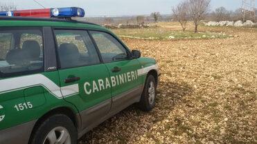 Arma dei Carabinieri, Corpo forestale. Concorso per 11 tenenti