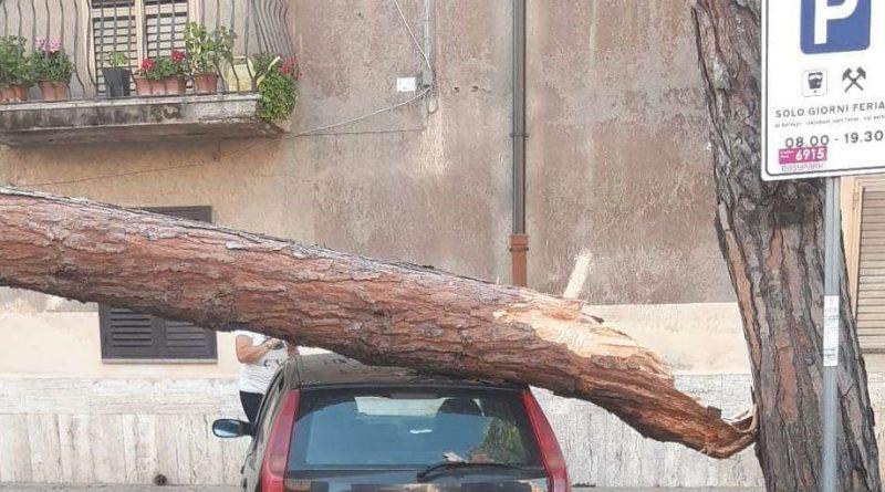 Vibo Valentia – Intervento dei Vigili del Fuoco per caduta albero