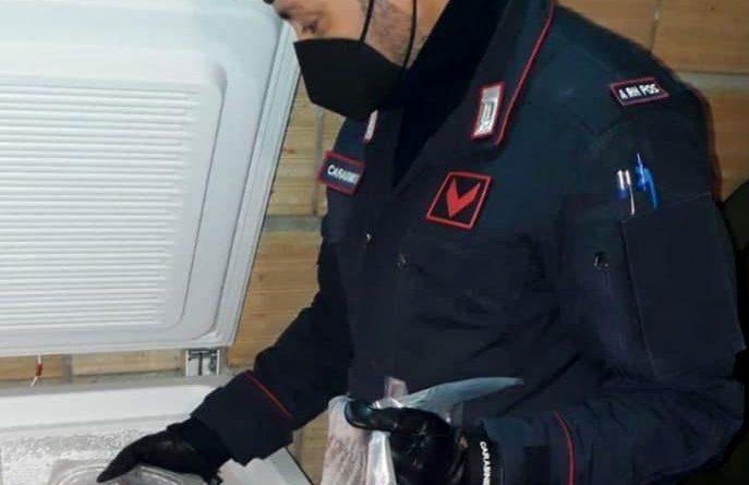 Delianuova. Oltre 200 ghiri rinvenuti nel congelatore, confezionati in pacchetti. Tre arresti per produzione di stupefacenti e cattura di animali di specie protetta